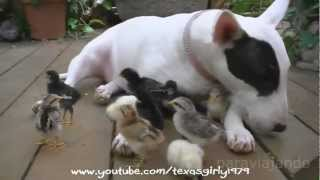 Download Amazing relationships between Animals, shock! Video