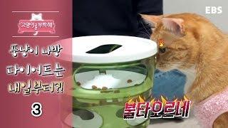 Download 고양이를 부탁해 - 뚱냥이 나방, 다이어트는 내일부터?! #003 Video