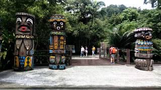 Download 台北市立動物園 熱帶雨林區 穿山甲館 Video