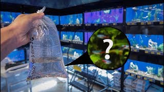 Download THE smallest FISH I've EVER bought!!! Video