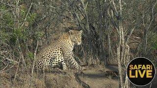 Download safariLIVE- Sunrise Safari - October 15, 2018 Video