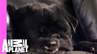 Download Oskar Creates Double the Trouble | Too Cute! Video