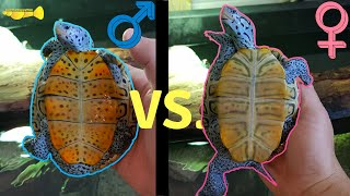 Download How to Tell if My Turtle is Male or Female Video