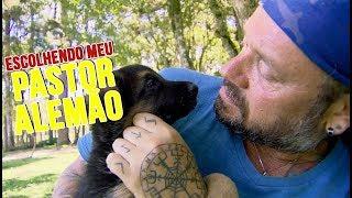 Download ESCOLHENDO MEU PASTOR ALEMÃO | RICHARD RASMUSSEN Video