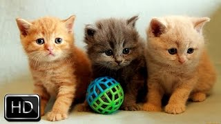 Download Adorable Kittens Playing Together | Too Cute! Video