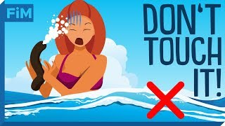 Download Why Sea Cucumbers Are Dangerous Video