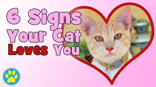 Download 6 Signs Your Cat Loves You! Video