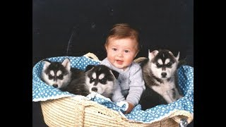 Download Husky Siberian And Babies Playing Videos Compilation 2016 - Cute Dogs Love Babies Video