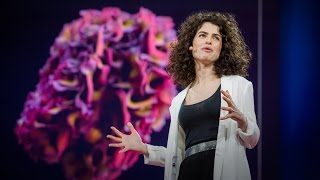 Download Design at the Intersection of Technology and Biology | Neri Oxman | TED Talks Video