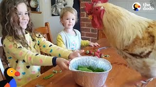 Download Little Girls Love Taking Care Of All Their Farm Animals | The Dodo Video