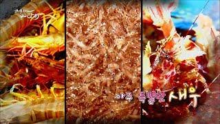 Download 새우삼총사 - 보리새우&불새우&닭새우 [어영차바다야] Video