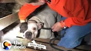 Download People Find PIT BULL Chained in the Basement of New Home | The Dodo Pittie Nation Video