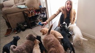 Download Husband Surprises Wife by Filling House With Puppies! Video