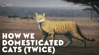 Download How We Domesticated Cats (Twice) Video
