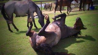 Download Funny Horses 🐴🐴 Funny Horses Moments And Fails (Part 1) [Funny Pets] Video