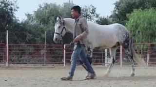 Download Perdidos De Sinaloa - La Pura Verdad (Video Oficial) (2016) - ″EXCLUSIVO″ Video