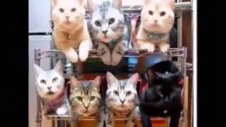Download 【癒されたら負け】おもしろ可愛い動物画像集まとめ(子猫子犬赤ちゃん動物達) Video