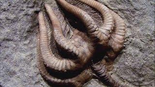 Download 16 Strangest Living Fossils Part 2 Video