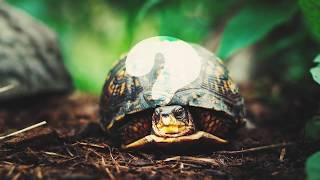 Download सर कटने पे भी नहीं मरता ये जानवर || 5 Animals That Can Live After Death Video