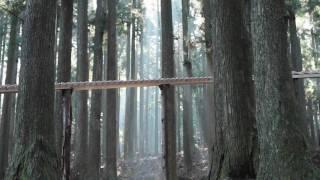 Download 森の木琴 Video