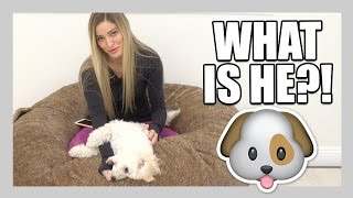 Download What kind of dog is Matty?! | iJustine Video