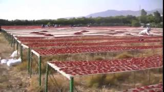 Download منشر تجفيف الطماطم Video