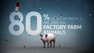 Download Fix Food - Fix Antibiotics - Meat Without Drugs Video