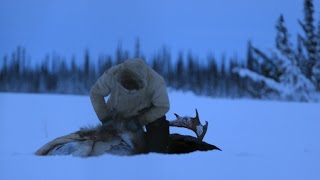 Download A Moose for the Winter Video