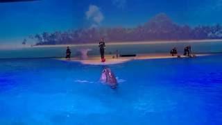Download Delfins show in the Kolmården Park Video