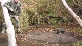 Download DP trap in action- live coon catch on trail camera Video