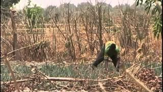 Download Economic Impact of Farm Subsidies Video
