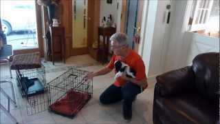 Download How to Housebreak a Puppy: Crate Training Video