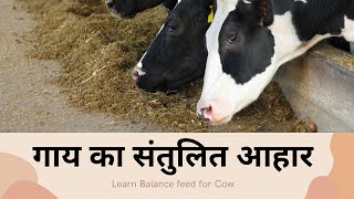 Download गाय का संतुलित आहार- Learn Balance feed for Cow Video