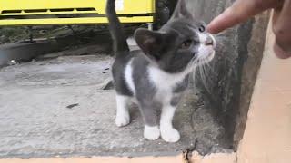 Download 自販機の下に隠れる野良子猫がカワイイ Video