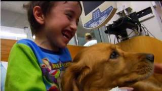 Download Holly The Pet Therapy Dog - Penn State Hershey Children's Miracle Network Video