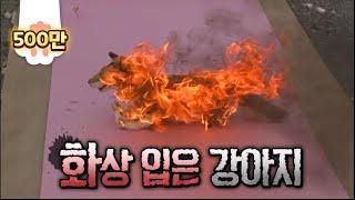 Download 살아있는 개에 불을 붙인 악마.. Video