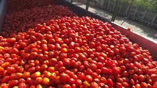 Download WATCH: We take you inside a tomato sauce factory Video