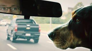 Download Dog's Best Friend: Being Smokey's Handler Video