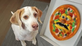 Download Funny Dog vs. Annoying Pizza Prank: Funny Dog Maymo Video