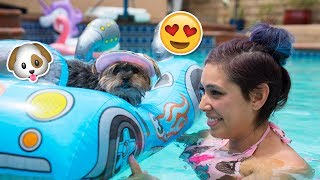 Download Buying My Dog Baby Pool Toys Video