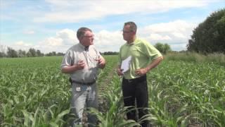 Download Corn School - Split Applying Nitrogen for Maximum Benefit Video