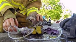Download GoPro: Fireman Saves Kitten Video