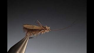 Download Tying a Wonder wing caddis with Barry Ord Clarke Video