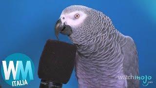 Download Top 10 ANIMALI più INTELLIGENTI del mondo! Video