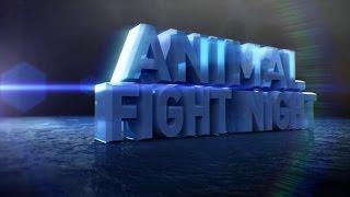 Download Animal Fight Night Video