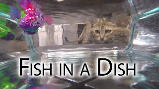 Download Fish in a Dish Video