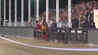 Download Qarabağ atları Kral Vindzor At Şousunda Video