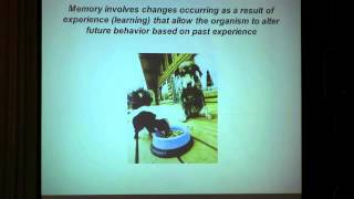 Download The Neuroscience of Learning and Memory Video