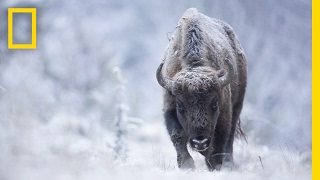 Download Join a Wildlife Photographer on the Hunt for the Perfect Shot | Short Film Showcase Video