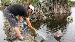 Download Pescador Pesca Tilapias Grandes de Laguna - Grabado todo en 4K Video